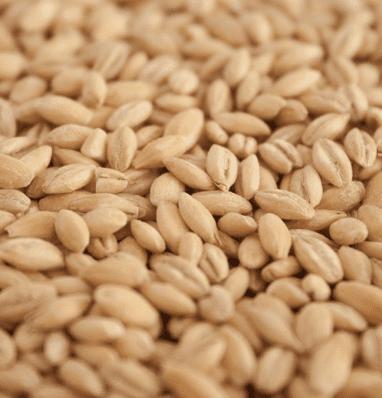 Biodynamic pearl barley